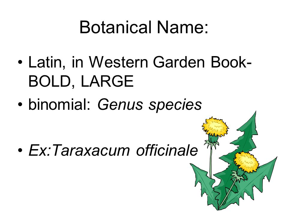 Botanical Name: Latin, in Western Garden Book- BOLD, LARGE
