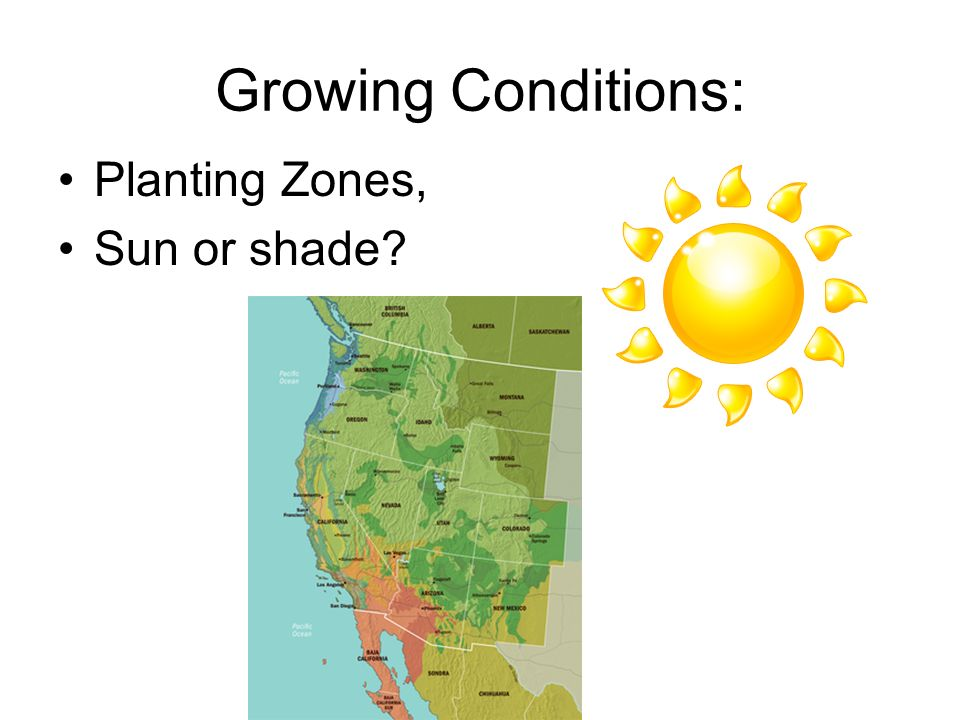 Growing Conditions: Planting Zones, Sun or shade