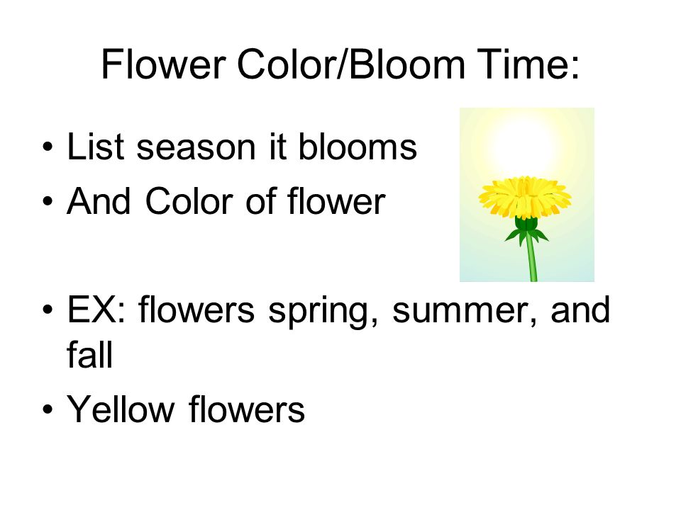 Flower Color/Bloom Time: