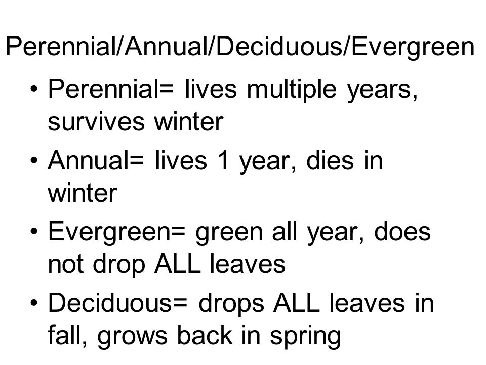 Perennial/Annual/Deciduous/Evergreen