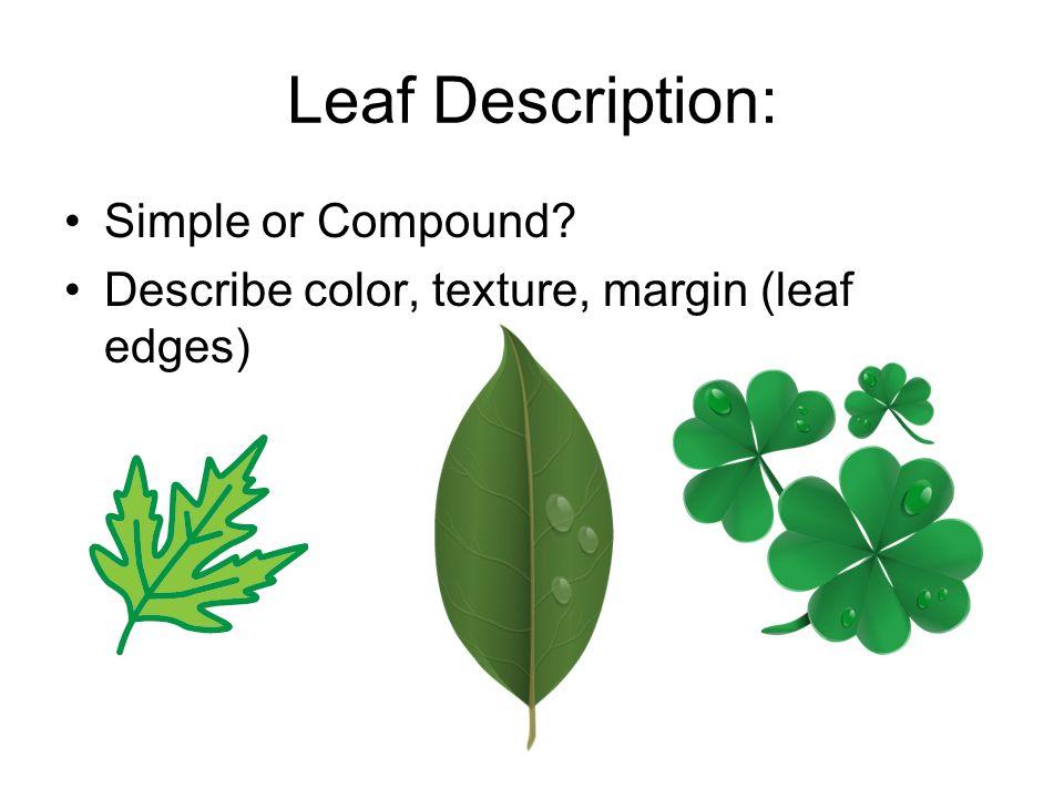 Leaf Description: Simple or Compound