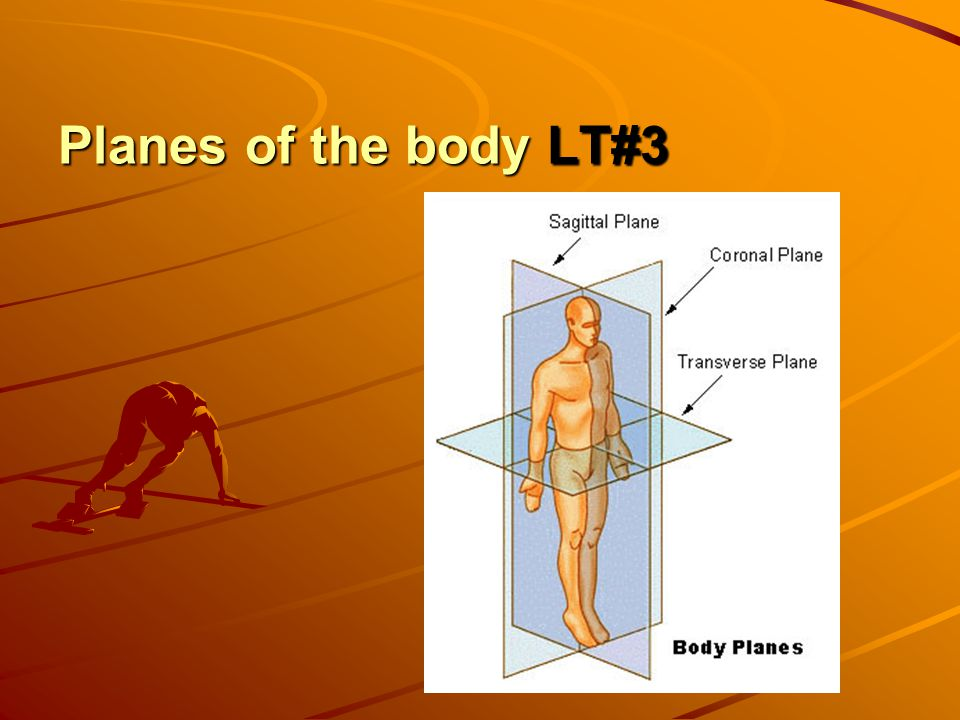 Planes of the body LT#3