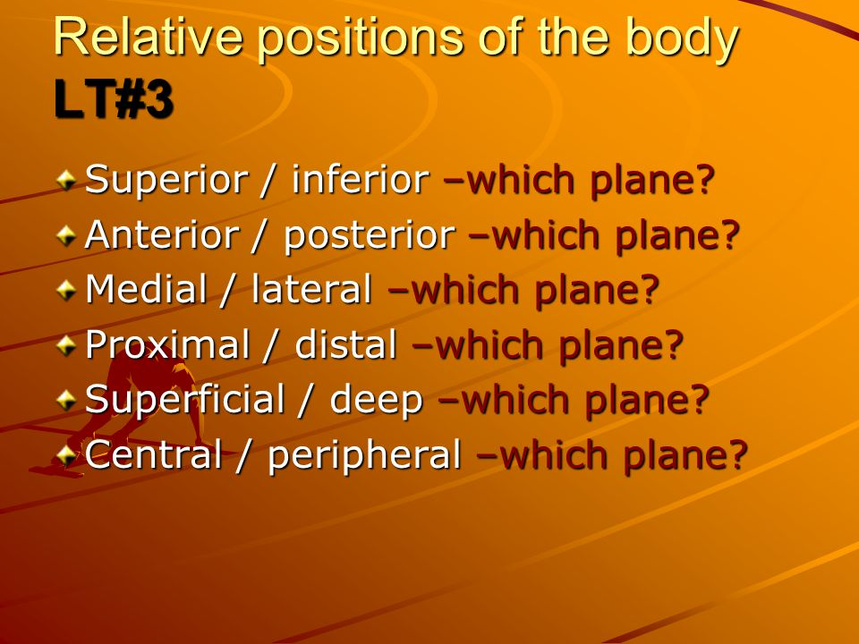Relative positions of the body LT#3