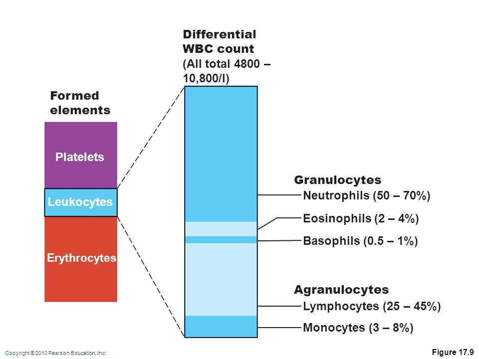 Differential WBC count (All total 4800 – 10,800/l) Formed elements