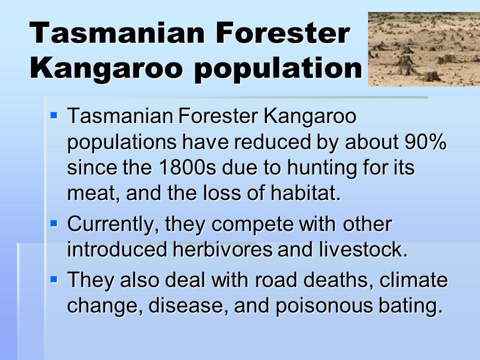 Tasmanian Forester Kangaroo population