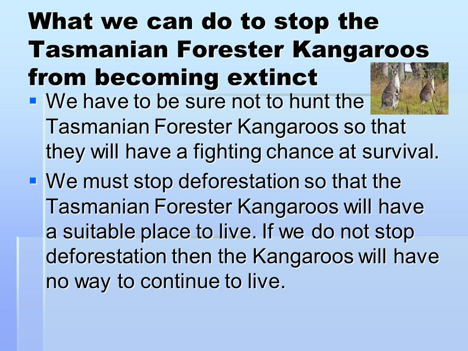 What we can do to stop the Tasmanian Forester Kangaroos from becoming extinct