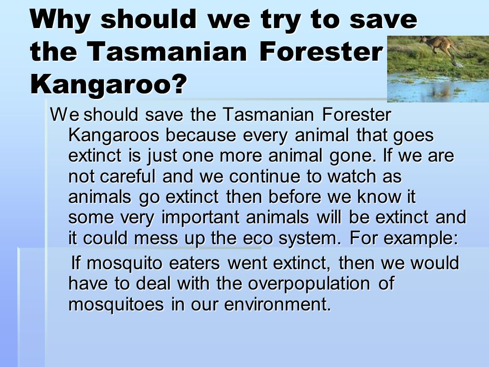 Why should we try to save the Tasmanian Forester Kangaroo