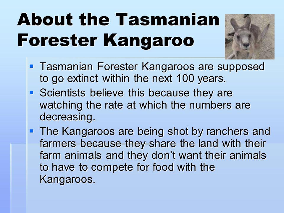 About the Tasmanian Forester Kangaroo