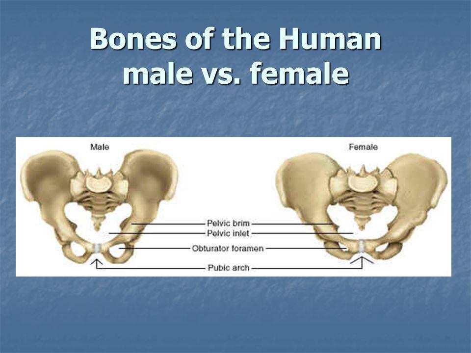 Bones of the Human male vs. female