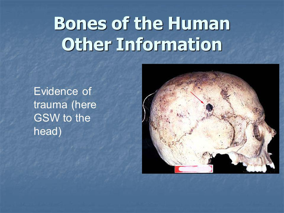 Bones of the Human Other Information