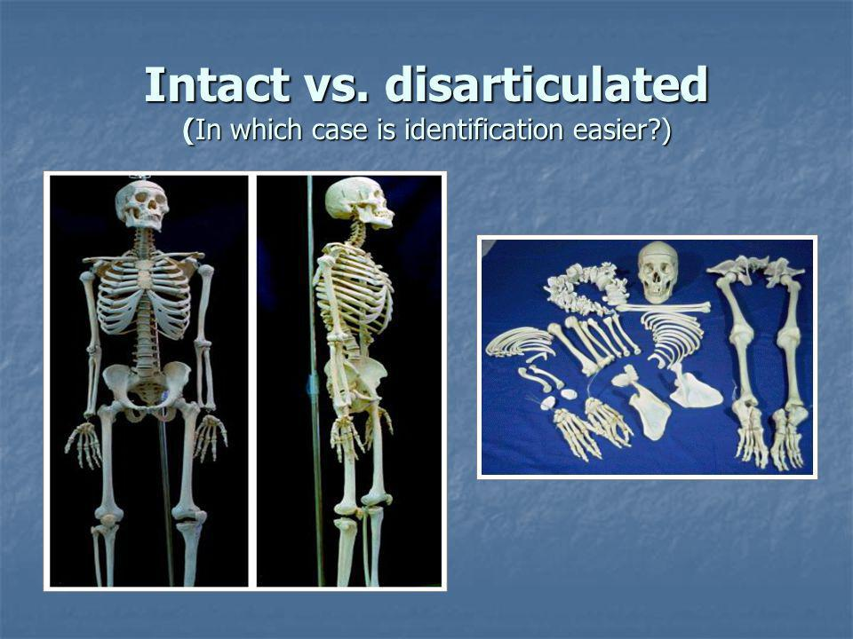 Intact vs. disarticulated (In which case is identification easier )