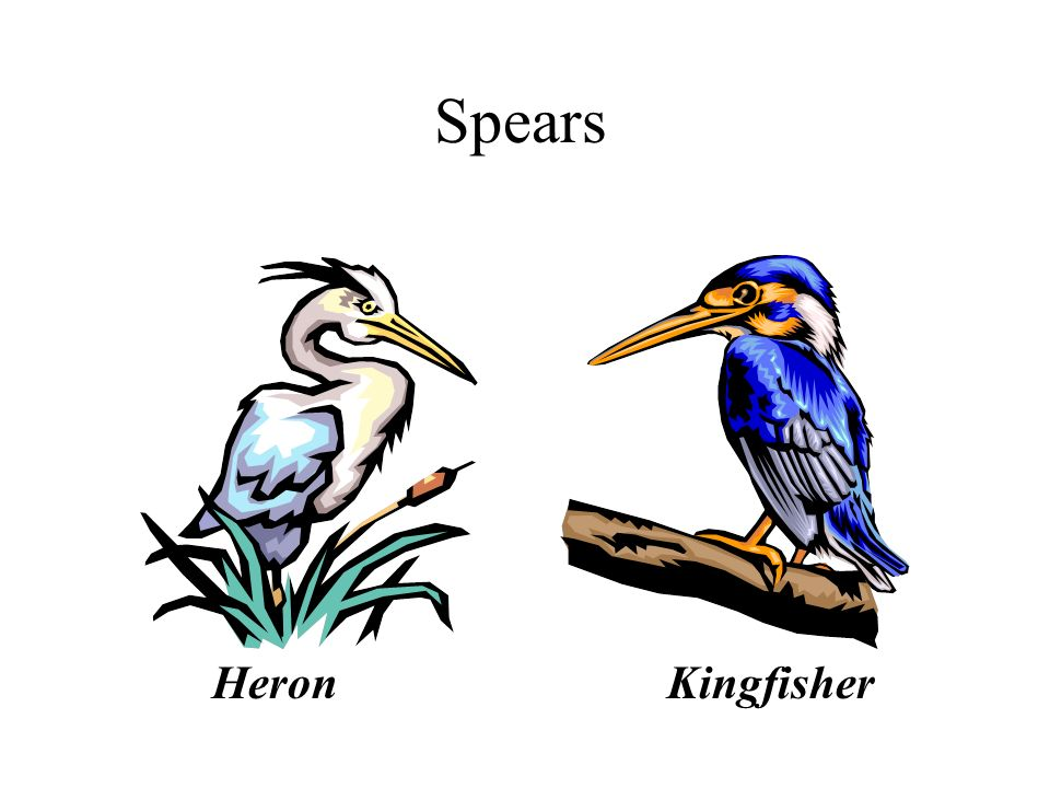 Spears Heron Kingfisher