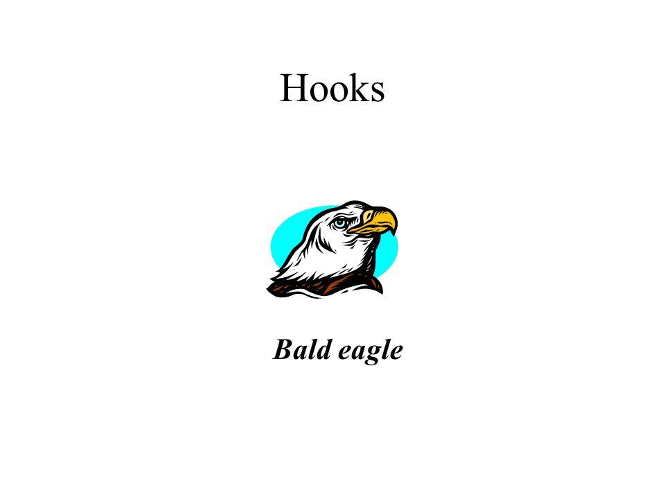 Hooks Bald eagle