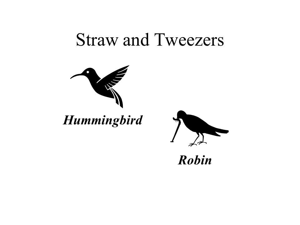 Straw and Tweezers Hummingbird Robin