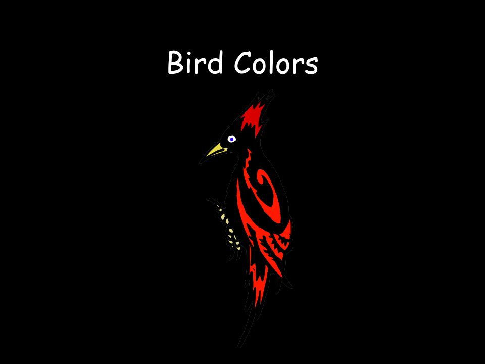 Bird Colors