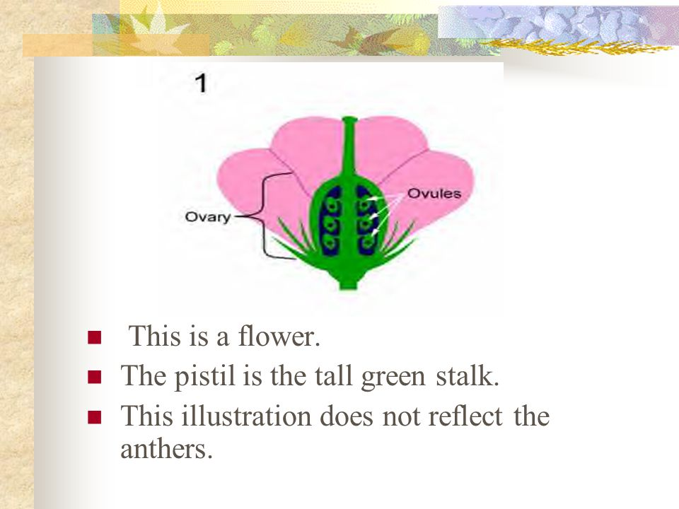 This is a flower. The pistil is the tall green stalk.