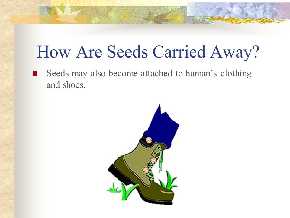 How Are Seeds Carried Away