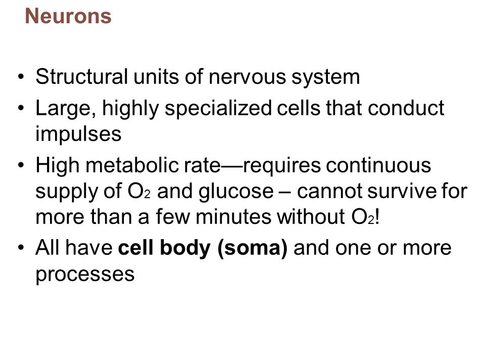 Neurons Structural units of nervous system. Large, highly specialized cells that conduct impulses.