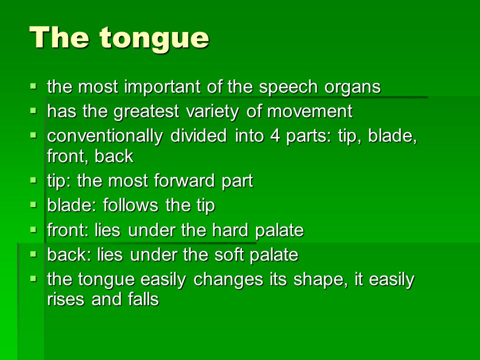 The tongue the most important of the speech organs