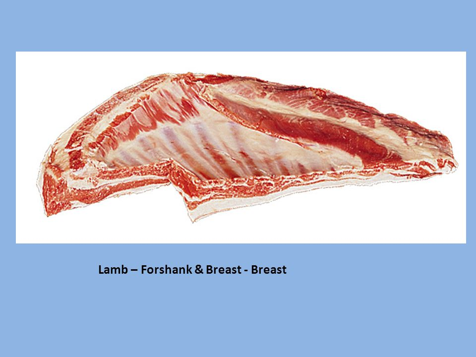 Lamb – Forshank & Breast - Breast