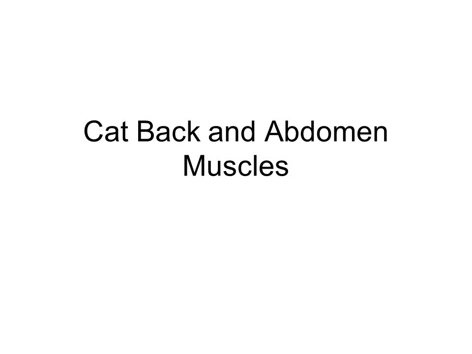Cat Back and Abdomen Muscles