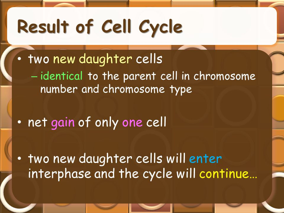 Result of Cell Cycle two new daughter cells net gain of only one cell