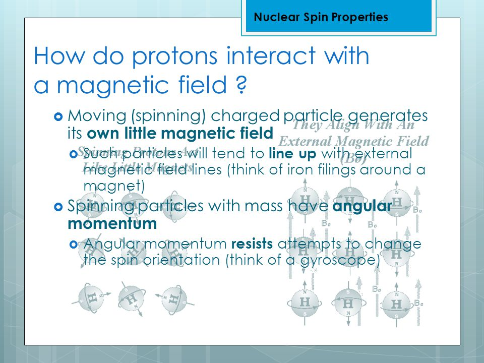 How do protons interact with a magnetic field