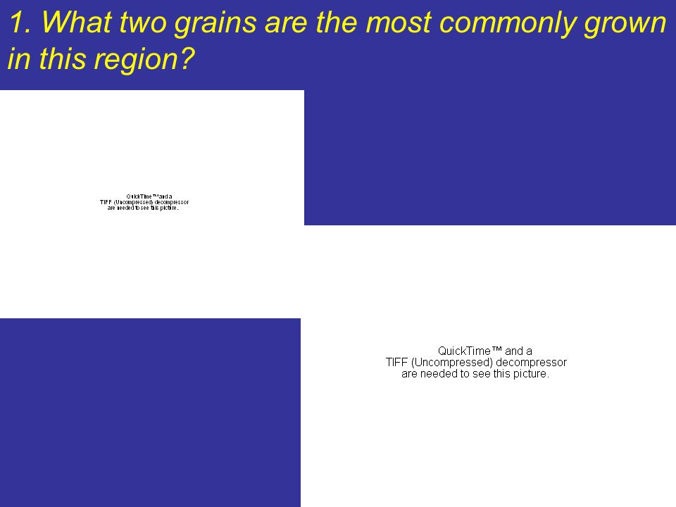 1. What two grains are the most commonly grown in this region
