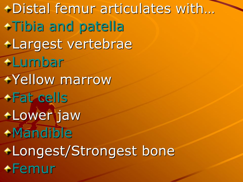 Distal femur articulates with…