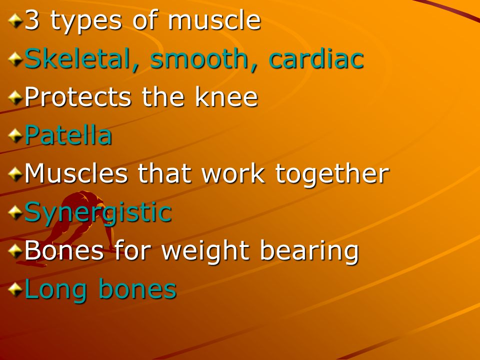 3 types of muscle Skeletal, smooth, cardiac. Protects the knee. Patella. Muscles that work together.