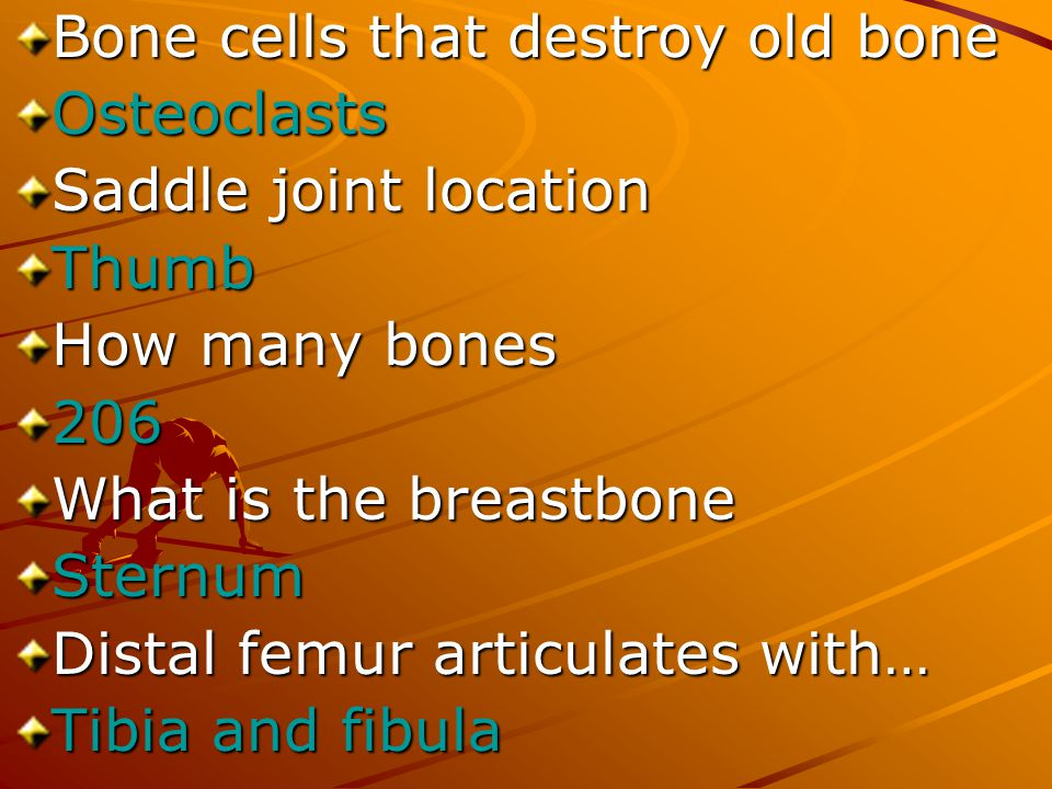 Bone cells that destroy old bone