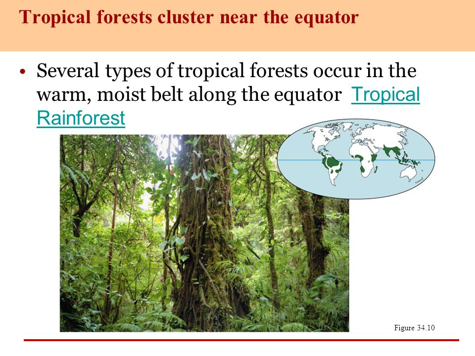 Tropical forests cluster near the equator