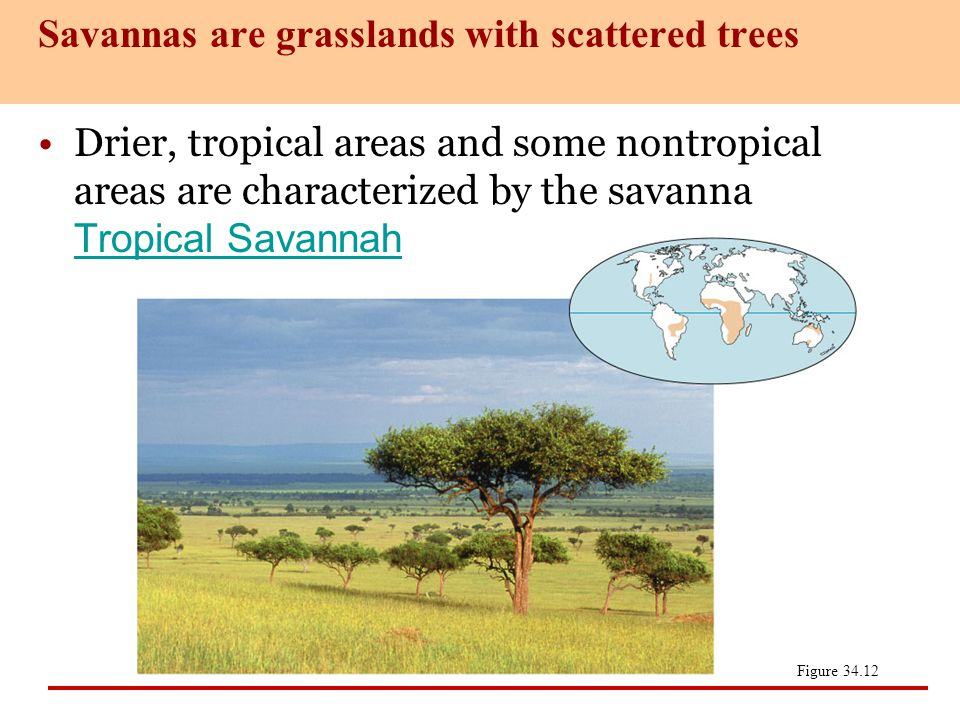 Savannas are grasslands with scattered trees