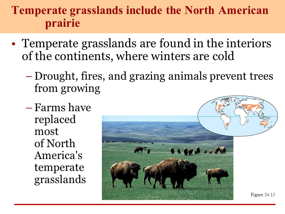 Temperate grasslands include the North American prairie
