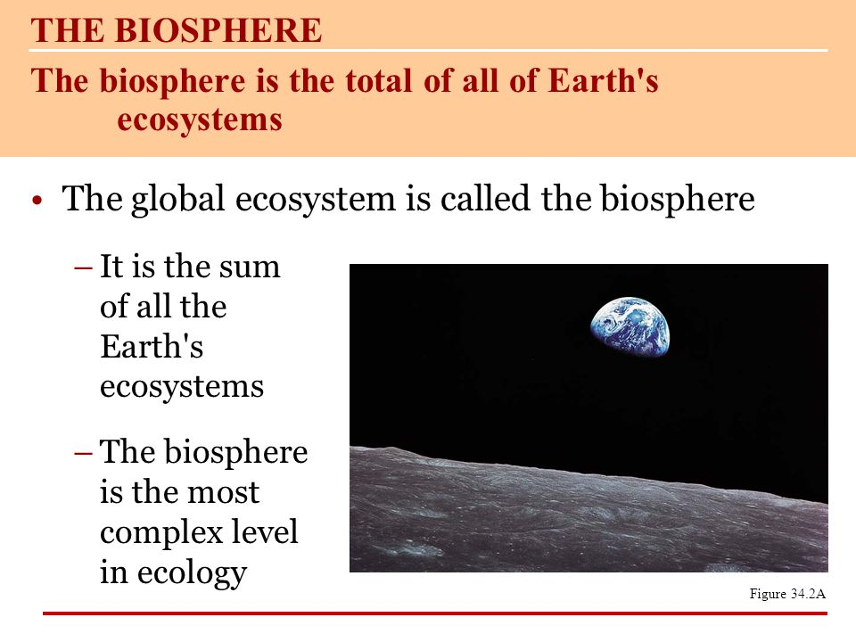 The biosphere is the total of all of Earth s ecosystems