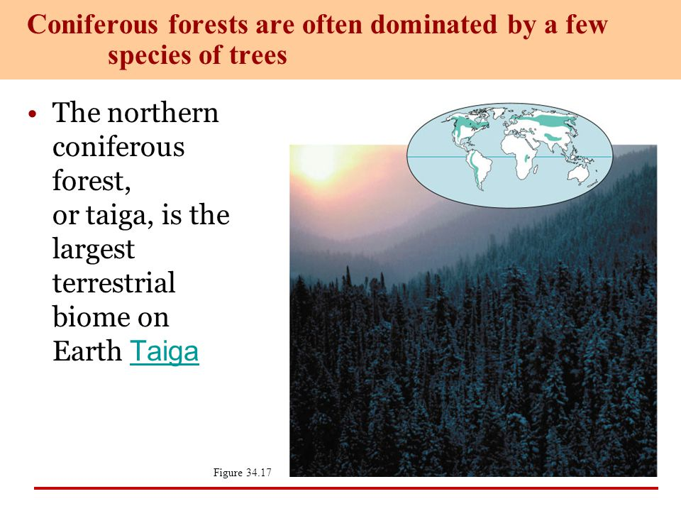 Coniferous forests are often dominated by a few species of trees