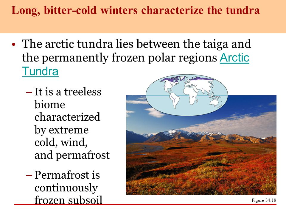 Long, bitter-cold winters characterize the tundra