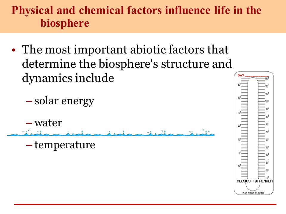 Physical and chemical factors influence life in the biosphere