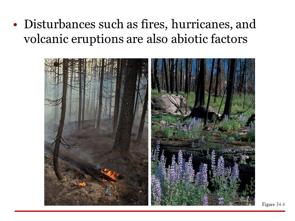 Disturbances such as fires, hurricanes, and volcanic eruptions are also abiotic factors