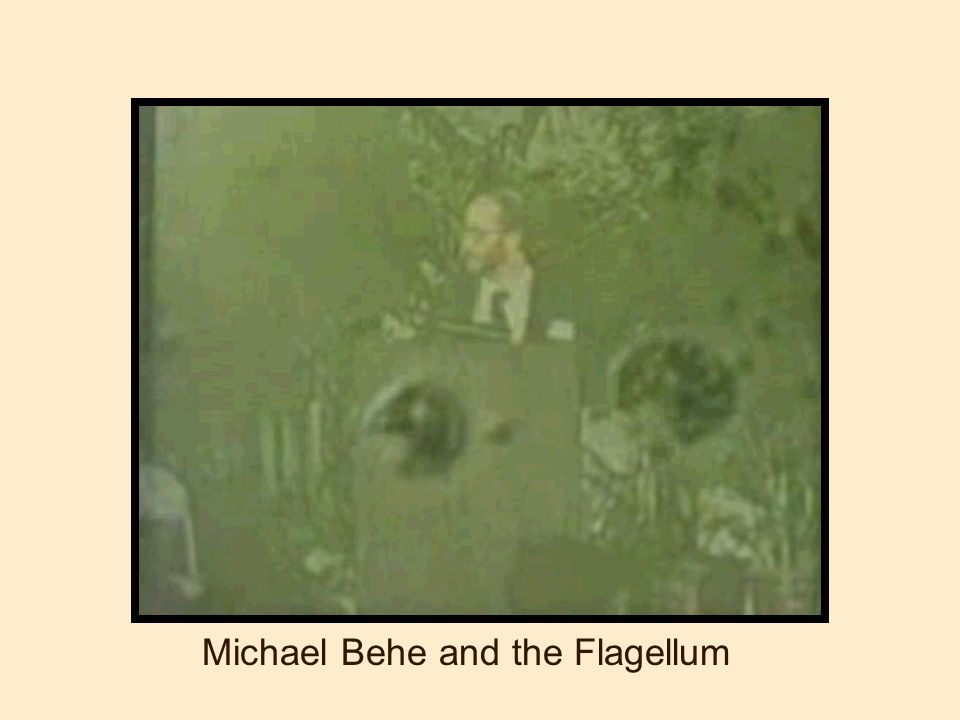 Michael Behe and the Flagellum