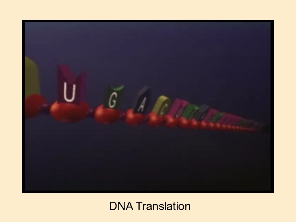 DNA Translation