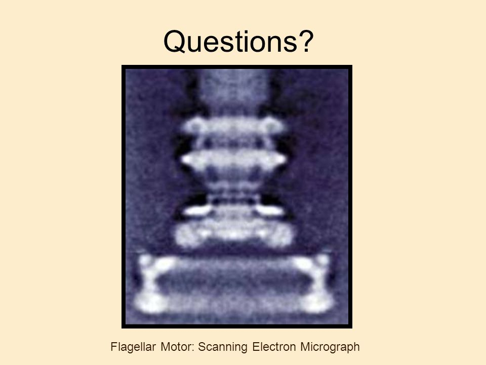 Questions Flagellar Motor: Scanning Electron Micrograph