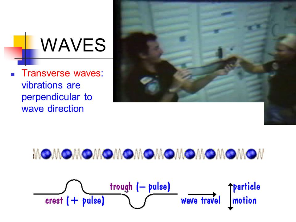 WAVES Transverse waves: vibrations are perpendicular to wave direction