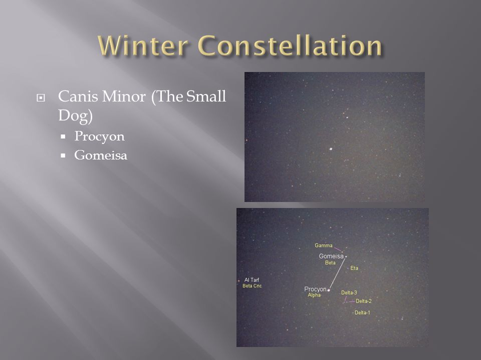 Winter Constellation Canis Minor (The Small Dog) Procyon Gomeisa
