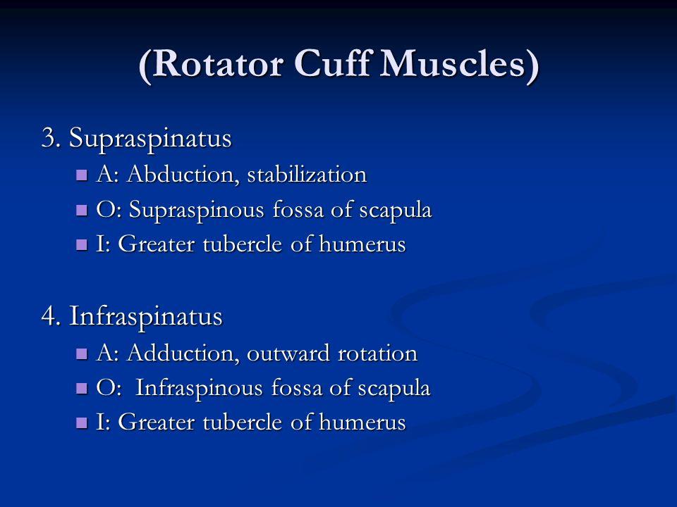 (Rotator Cuff Muscles)