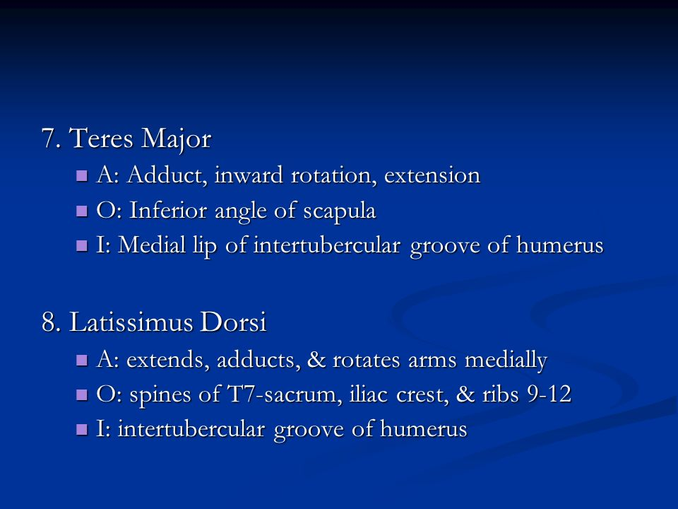 7. Teres Major 8. Latissimus Dorsi
