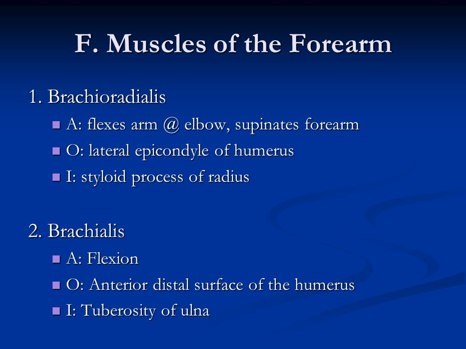 F. Muscles of the Forearm