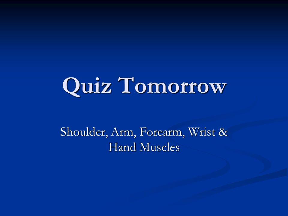 Shoulder, Arm, Forearm, Wrist & Hand Muscles
