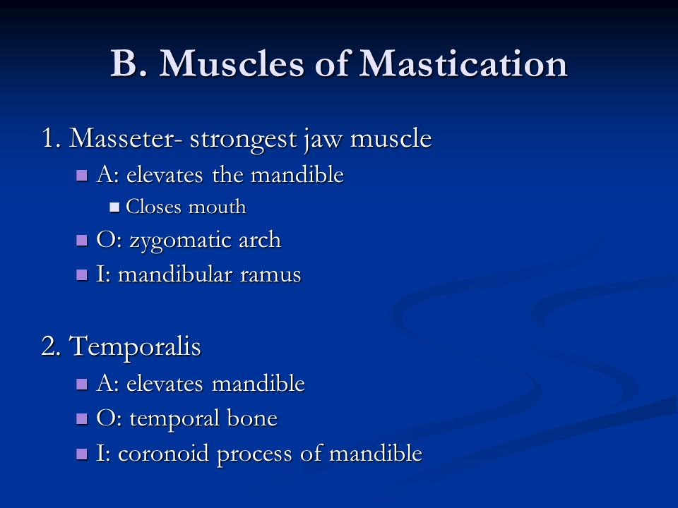 B. Muscles of Mastication