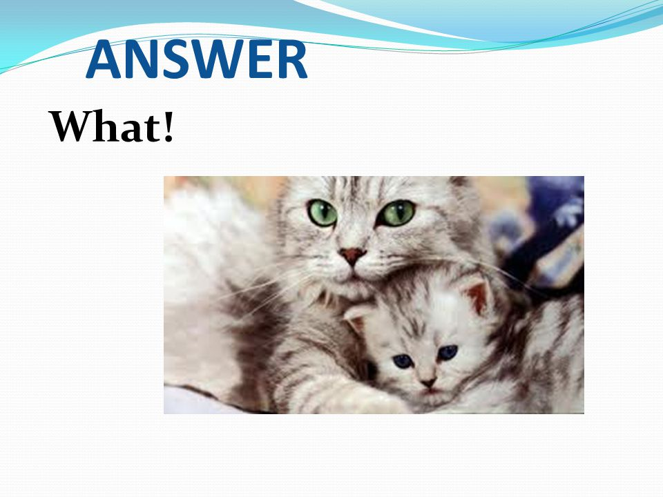 ANSWER What!